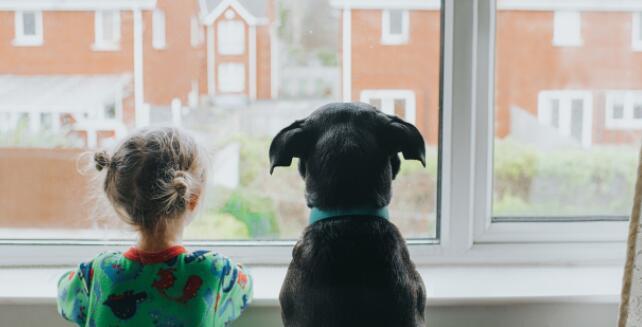 在家庭旅游中期待买家的宠物